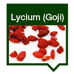 Lycium